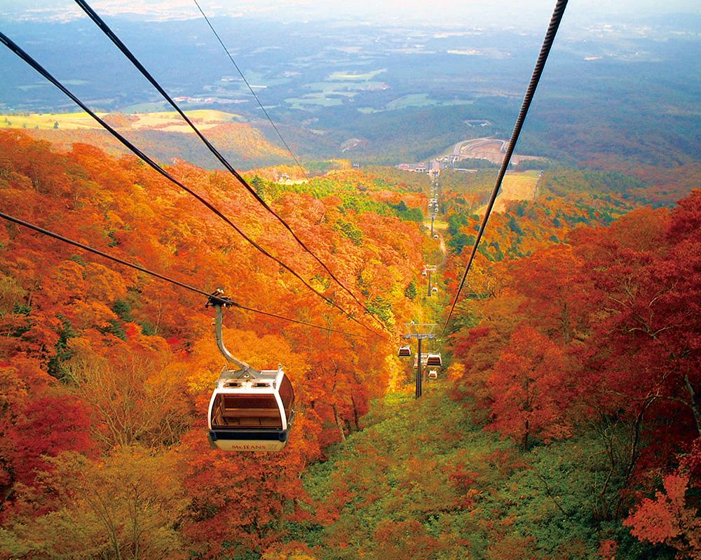 深紅に染まる秋の那須高原。那須高原の秋は紅・黄・橙と、とても鮮やか。<br>見頃予想:9月下旬~11月上旬